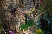 Love the little iris and bromeliad in the tree setting.