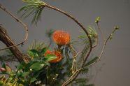 Very neat arrangement and unusual flower.