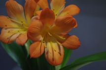 How could you resist the colour and cheerfulness of this? Now I just have to find out what it is.