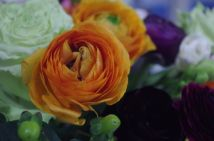 Orange ranunculus. The bulbs for these are available at many suppliers.