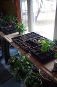 Planting bench