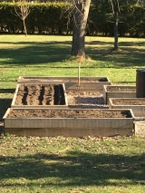 The veggie beds, some of which are planted.