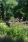 A broader pic of the bee balm (or bergamort)